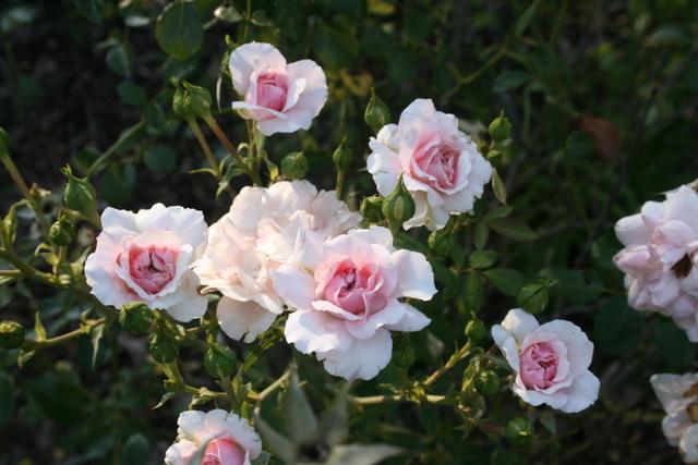 Garden_043